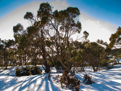 Mount Baw Baw August 2012